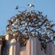 Dome Of Birds
